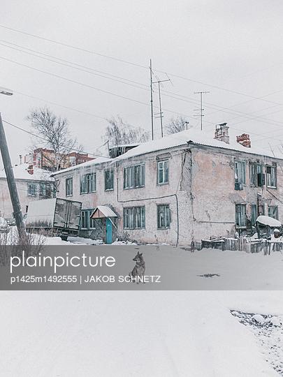Hund im Schnee, Tomsk - p1425m1492555 von JAKOB SCHNETZ