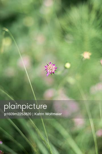 Flower buds - p1609m2253820 by Katrin Wolfmeier