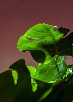 Leaf - p075m2122386 by Lukasz Chrobok