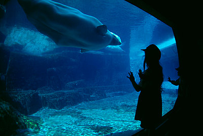 Children watching animals swimming in aquarium - p3013968f by Brian Cassie
