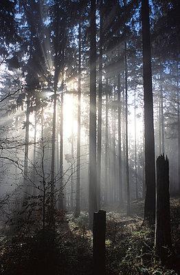 Märchenwald - p1870206 von Katarzyna Zommer