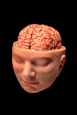 Gehirn - p450m902382 von Hanka Steidle