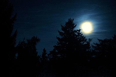 Vollmondnacht - p8760168 von ganguin