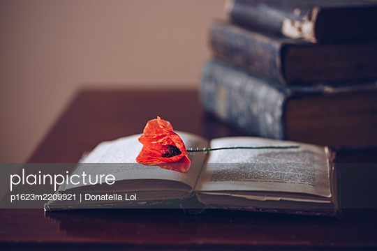 Lying poppy - p1623m2209921 by Donatella Loi