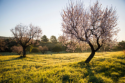 Scenic view of trees in field - p429m1561785 by RUSS ROHDE