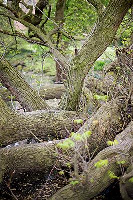 Baum - p5862154 von Kniel Synnatzschke
