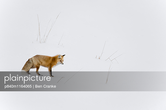 p840m1164065 von Ben  Cranke