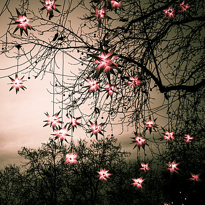 Christmas stars - p401m1091268 by Frank Baquet