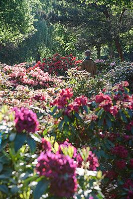 Mädchen im Rhododendron-Blütenmeer - p703m1200263 von Anna Stumpf