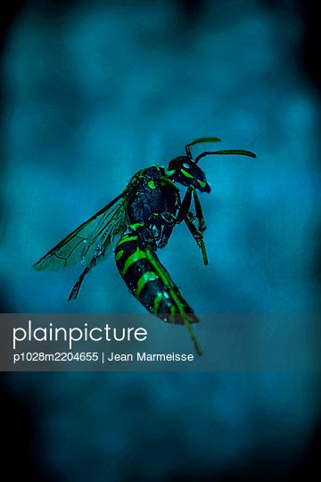 Wasp - p1028m2204655 by Jean Marmeisse