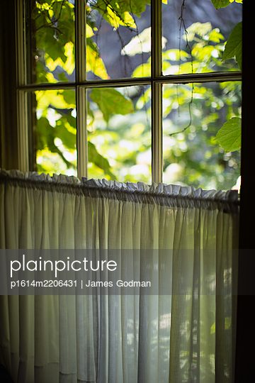 View out window - p1614m2206431 by James Godman
