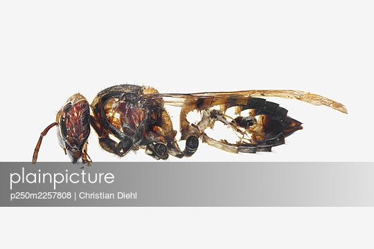 p250m2257808 by Christian Diehl