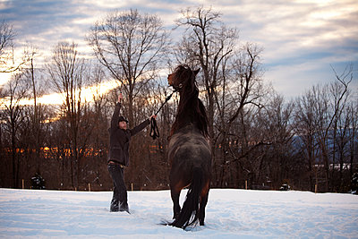 Man training horse on snow field - p1166m1096071f by Cavan Images