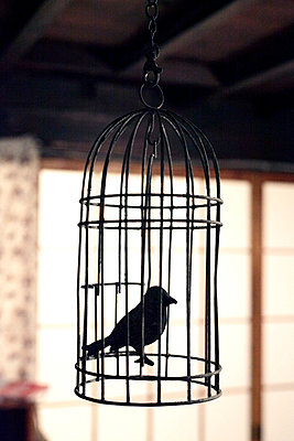 metal fake bird in cage - p265m769393 by Oote Boe