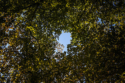 Hole in the trees - p750m940288 by Silveri