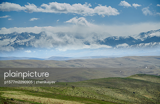 USA, Wild horses in a meadow in the background snow-capped mountains - p1577m2290905 by zhenikeyev