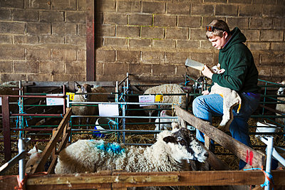 Man standing next to a sheep pen in a stable, holding and bottle feeding a newborn lamb. - p1100m1450922 by Mint Images