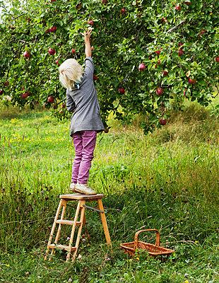 Blond girl picking apples - p312m670272f by Matilda Lindeblad