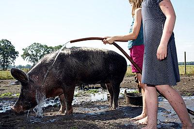 Schwein im Paradies - p4060448 von clack