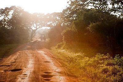 Safari in Sri Lanka - p6370072 by Florian Stern