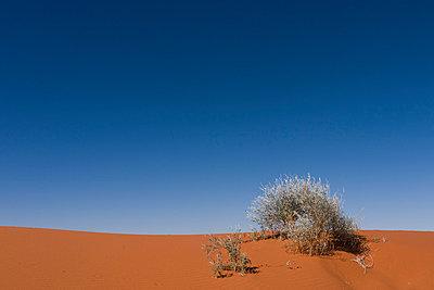 Wüste in Australien - p1016m792520 von Jochen Knobloch