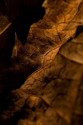 Leaf - p199m887333 by Oliver Jäckel