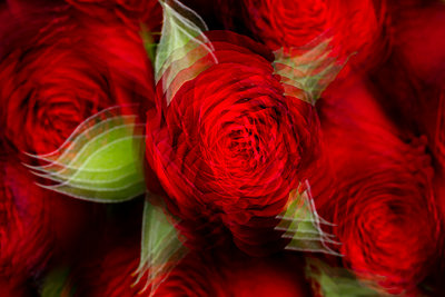 Red roses - p919m2193282 by Beowulf Sheehan