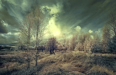 Russland im Herbst - p1653m2232280 von Vladimir Proshin
