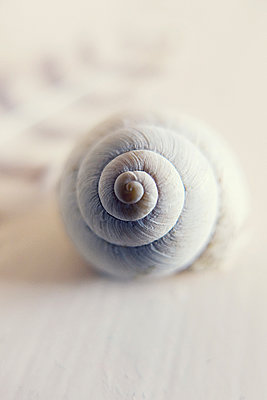 Snail shell - p879m1526131 by nico