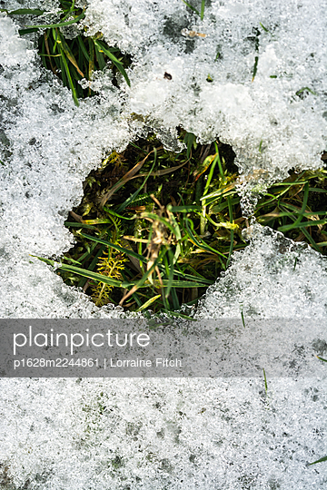 Grass with snow and ice - p1628m2244861 by Lorraine Fitch