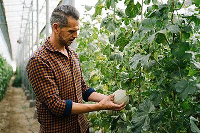 Farmer examining melon at organic farm - p300m2286560 by Manu Padilla Photo