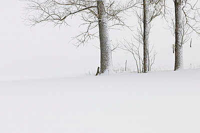 View of snow covered trees at Rhoen Mountains - p300m718955f by Martin Rügner