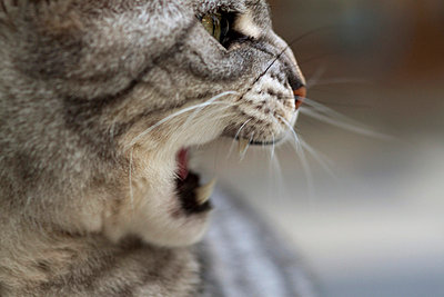 Angry cat - p7390431 by Baertels
