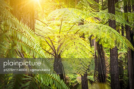 Redwood Whakarewarewa Forest - p1275m1146935 von cgimanufaktur