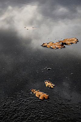 Autumn leaves - p1137m987263 by Yann Grancher