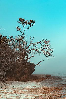 Seascape - p1166m2137129 by Cavan Images