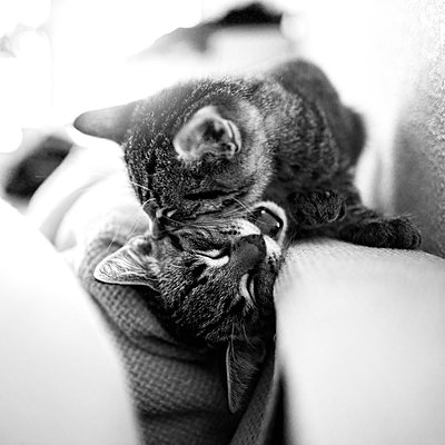 Kittens - p1507m2027756 by Emma Grann