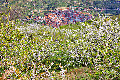 Cherry tree blossom in Jerte valley, Caceres, Extremadura, Spain - p343m1167927 by David Santiago Garcia