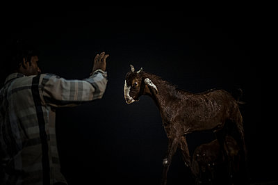Man and goat - p1007m1144379 by Tilby Vattard