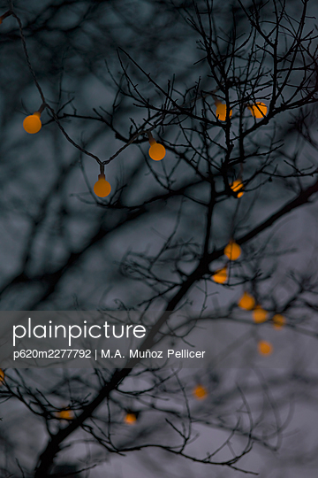 Tree branches with fairy lights at twilight - p620m2277792 by M.A. Muñoz Pellicer