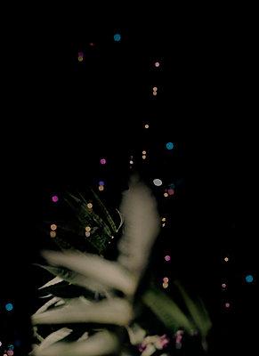 Lichtpunkte in der Dunkelheit - p1279m1222284 von Ulrike Piringer