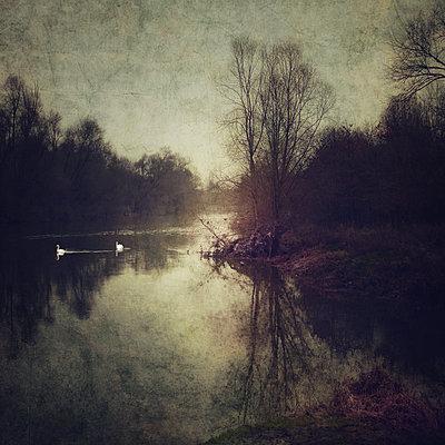 The Bonny Swans - p1633m2209088 von Bernd Webler