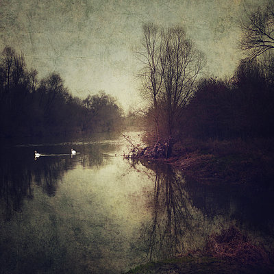 The Bonny Swans - p1633m2209088 by Bernd Webler