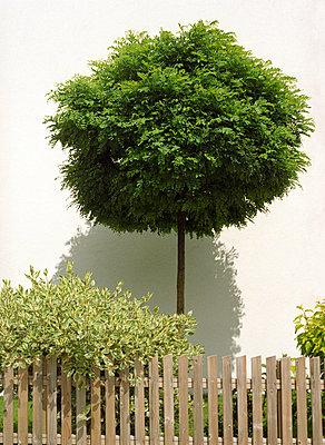 Garten - p6060404 von Iris Friedrich