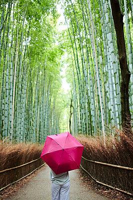 Schirm im Bambuswald - p954m2110903 von Heidi Mayer