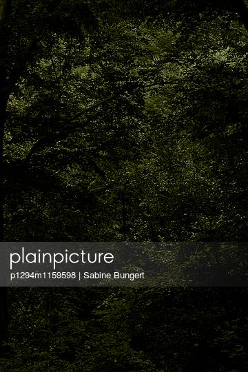 p1294m1159598 by Sabine Bungert