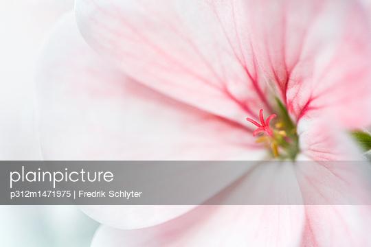 p312m1471975 von Fredrik Schlyter