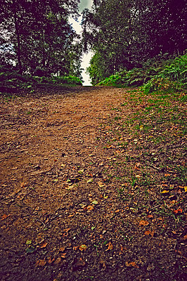 Empty sandy pathway between trees - p1047m789463 by Sally Mundy
