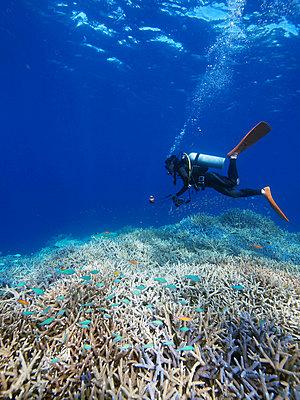 Diver undersea, Okinawa Prefecture, Japan - p5148141f by Shirokuma