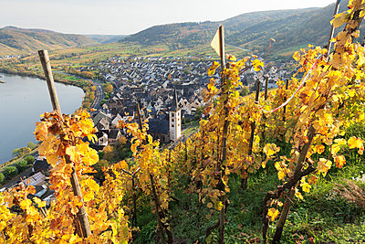 View from Calmont Hill to Bremm, Moselle Valley, Rhineland-Palatinate, Germany, Europe - p871m1583726 by Markus Lange